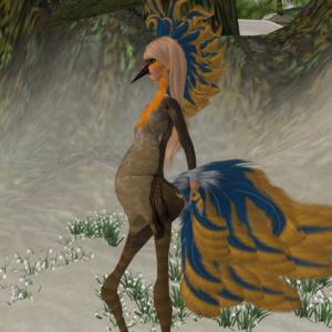 Meta Bird